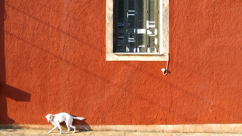 dog watch colona aegina 4.9.2015 web